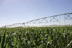 Celebrate Smart Irrigation Month