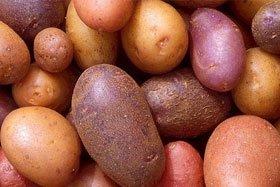 Potato Irrigation Management